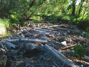 A logjam along Outlet Creek mixed with accumulated trash.